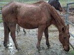 Horse Neglect: 'The mud and manure and urine was so thick'