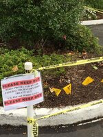 Briarwood Residents Protect Nesting Duck