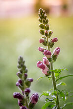 Spring!!!!