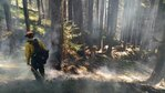 Crews complete mopping up 4 of 6 fires in Bunker Hill Complex