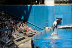 SeaWorld files complaint against OSHA investigator