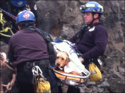 Photos: Firefighters rescue dog that fell off cliff in Idaho