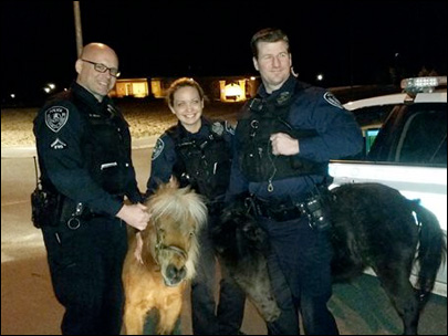 Alaska officers corral grazing miniature horses