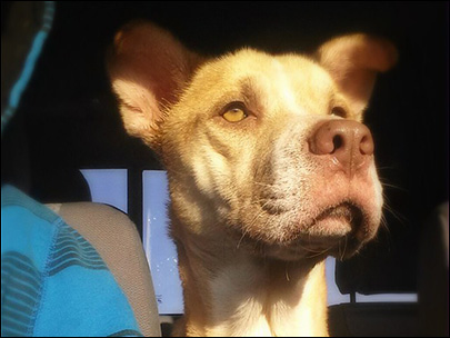 Starving dog rescued, now looking for new home