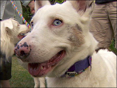 Tigard group works to save deaf dogs
