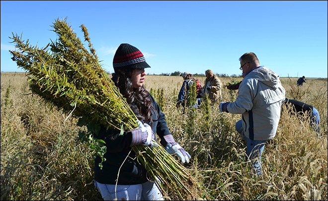 Official: Oregon hemp industry not what was envisioned
