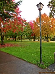 Autumn Colors In Eugene
