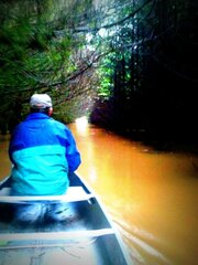 Canoeing through the trees