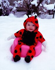 Little LadyBug In Snow