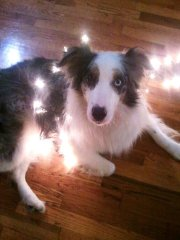 Jasper, rolling in the Christmas spirit.