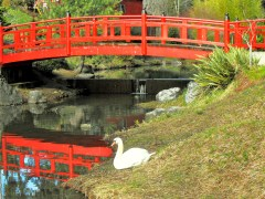 Japanese Garden in Mingus Park, Coos Bay