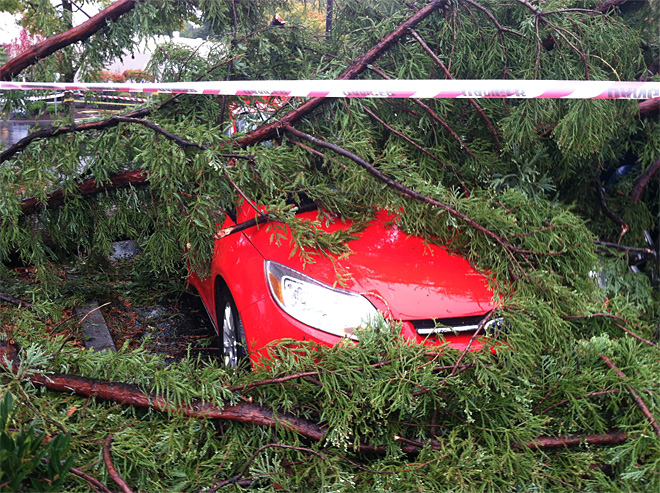 Tree falls on car in Oak Grove
