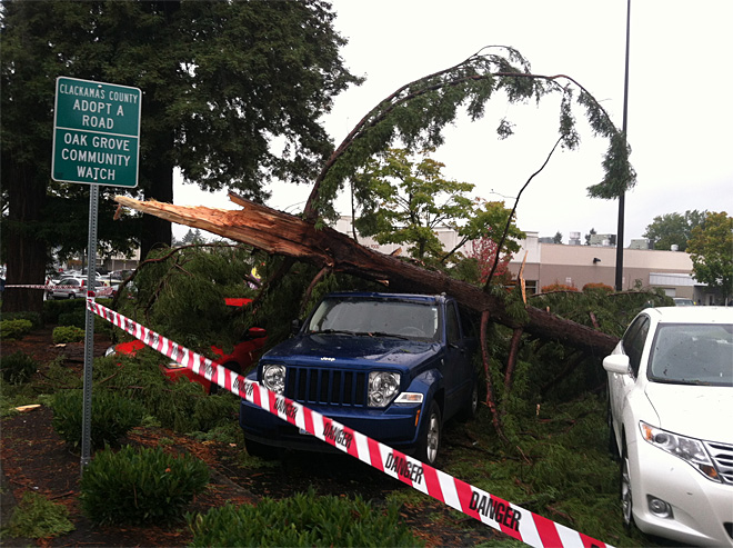 Tree falls on vehicles in Oak Grove