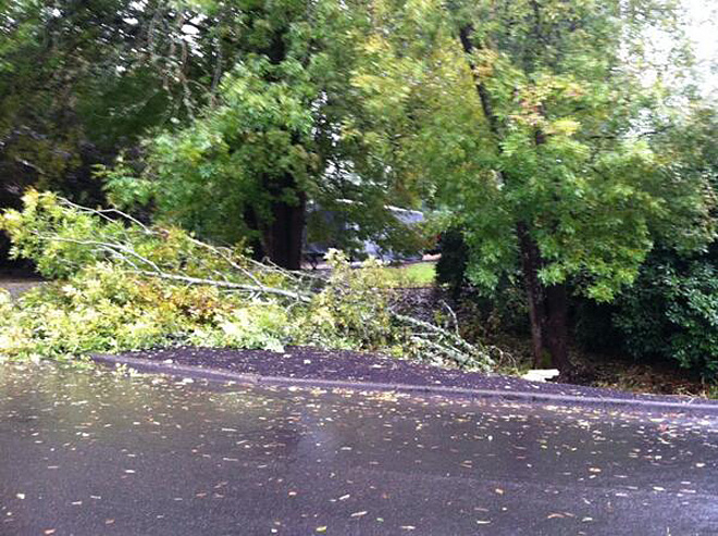 Trees down in SW Portland