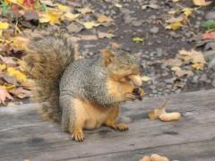 Hungry squirrell