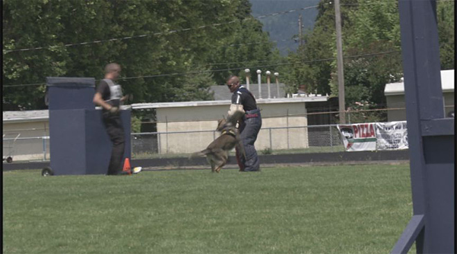Springfield K-9 Competition: 'We want them to see what we can do'