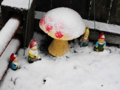 GNOMES IN THE SNOW