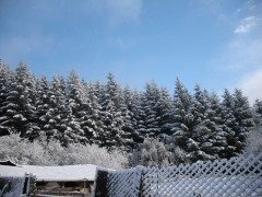 Snow at my home in Alsea