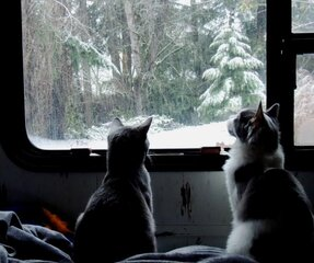 cats checking it out