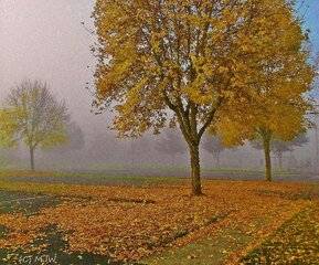 Foggy Autumn Morning At Bob Artz Park