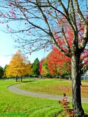 FALL COLORS IN THURSTON