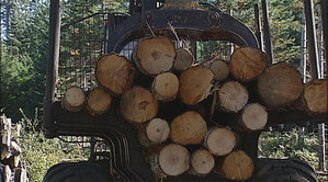 Loggers cutting firs to restore 25 acres of Marys Peak meadowland