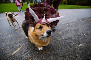 Photos: Costumed Corgis do Howloween in Seattle