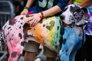 Photos: Prideful Pooches of the Seattle Pride Parade