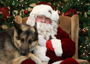 Photos: Santa Paws