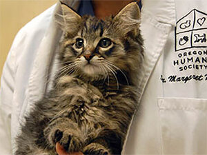 OHS helps heal kitten shot, left in dumpster