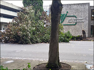 High winds whip across W. Oregon, downing trees and power lines