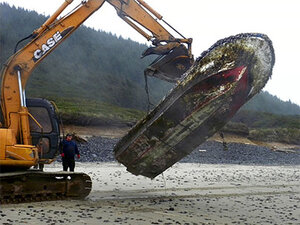 Derelict boat removed from beach north of Florence