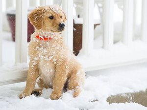 Photos: Dog's life on a snow day