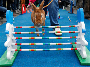Photos: Rabbits compete at Czech Republic 'Bunny Hop'