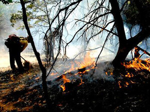 Oregon fire crews fight over 825 square miles of wildfire