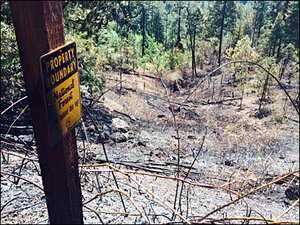2-acre fire in Oakridge: 'It'll be one of those years when things burn'
