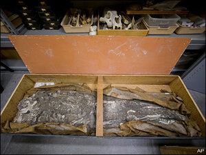 Museum to display 6,500-year-old human skeleton