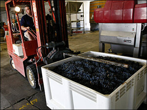 Good season for grapes, hazelnuts in Douglas County