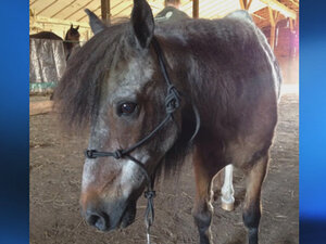Deputy shoots, kills family's pony: 'My vet said there was absolutely nothing wrong with him'