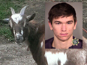 Police: Goat thief suspect caught with stolen bikes