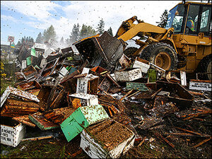 I-5 abuzz with millions of bees after semi truck tips over