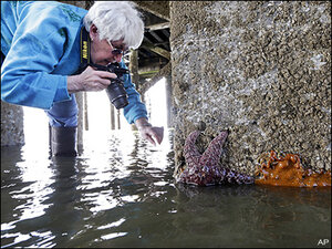 New sea star babies offer hope amid mass deaths in Pacific