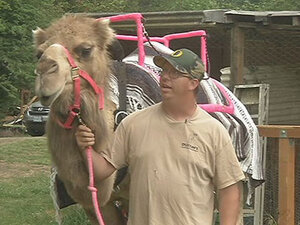 Camels in Oregon? 'I fell in love with the animal and just went from there'