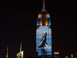 Photos of endangered animals shine on Empire State Building