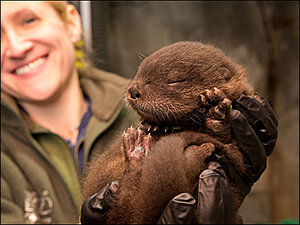 Can you name this adorable otter pup?