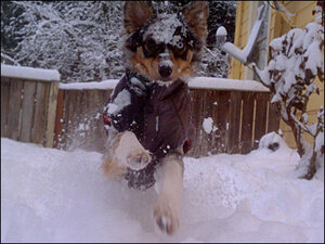 Photos: Snow Daze in Southern Willamette Valley