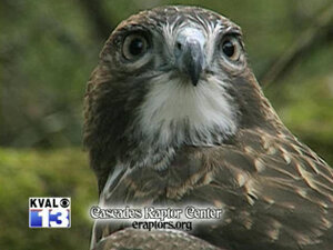 Cascades Raptor Center - Family Nature Discovery Days