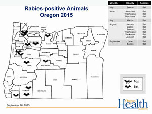 Bat tests positive for rabies: 3rd of year in Benton, 11th in Oregon