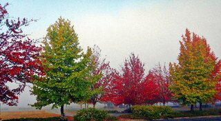 Autumn Color At Thurston Bus Station