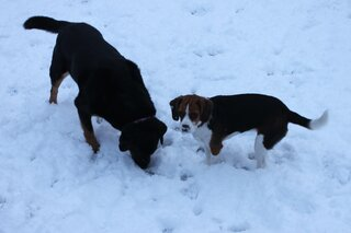 Puppy fun in the snow